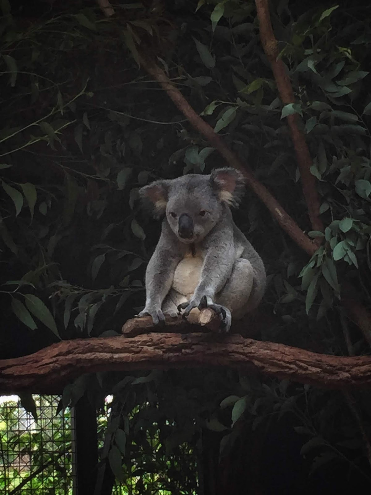 Travel Diary: Lone Pine Koala Sanctuary