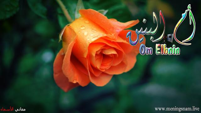 معنى اسم ام البنبن وصفات حاملة هذا الإسم Om Elbninb