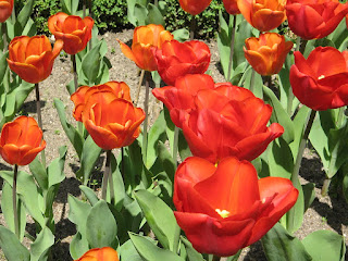 Flor en Madrid (España)
