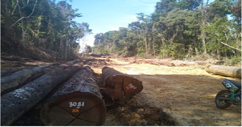 PT. SRP Disinyalir Melakukan Perambahan Kawasan Hutan