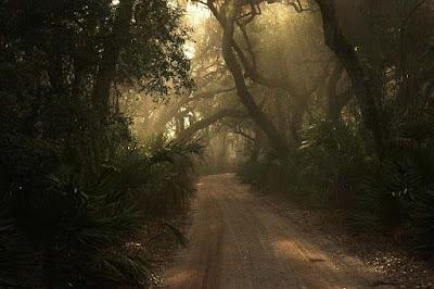 Pengertian Hutan dan Kehutanan Menurut UU 41 Tahun 1999 Tentang Kehutanan