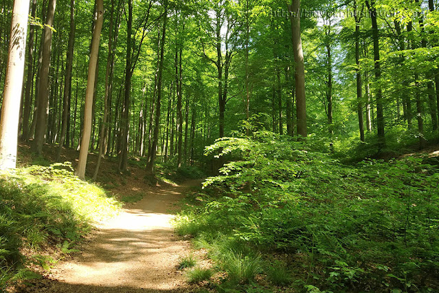UNESCO World Heritage Sites in Brussels Belgium Sonian Forest