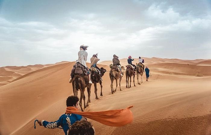 Pregnant Camel Bucks American Tourist in Morocco. She's Suing TripAdvisor
