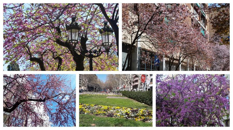 arbres en fleur Barcelone