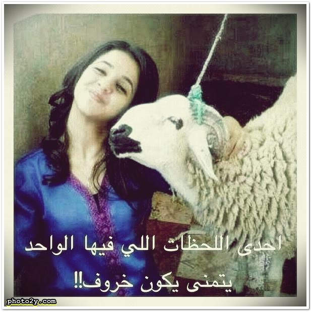 احدى اللحظات اللي فيها الواحد يتمنى يكون خروف