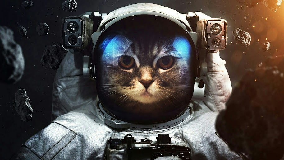 Astronaut, Cat, Space, 4K, 3840x2160, #48