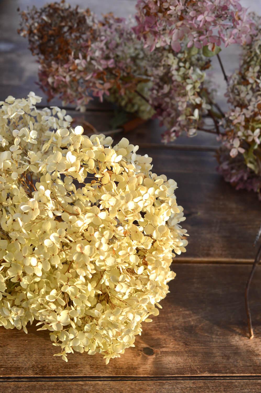 kuivatut-hortensiat