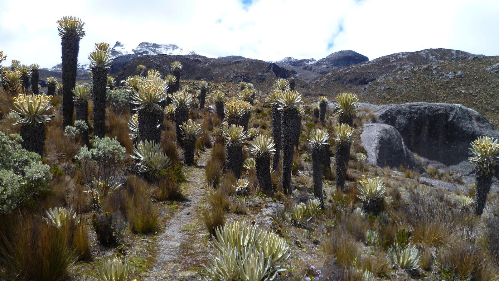 Newsletter Promotora Neptuno: Humboldt's University of ...  Los Nevados National Park