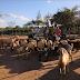 Valor de venda de caprinos de produtores rurais de Quijingue tem aumento
