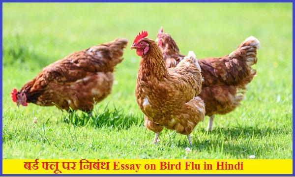 बर्ड फ्लू पर निबंध Essay on Bird Flu in Hindi