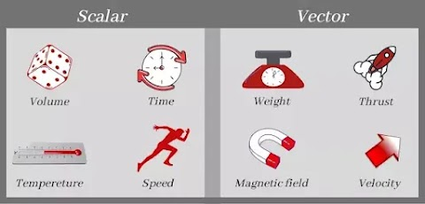 What are Scalars and Vectors in Physics?
