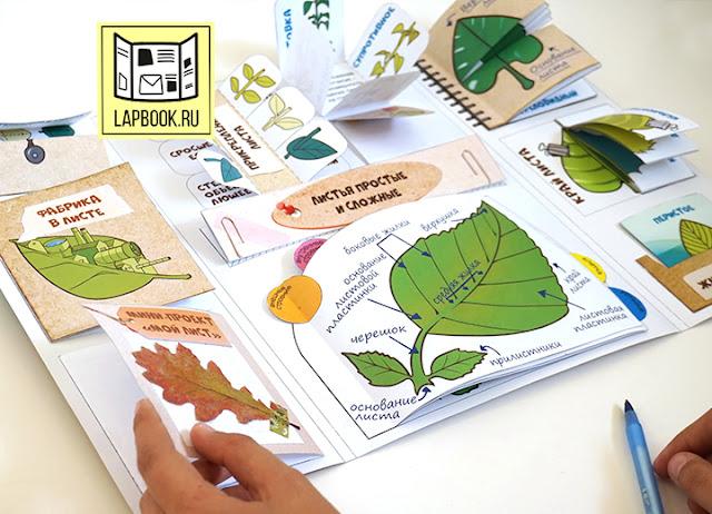 лэпбук для детей по ботанике