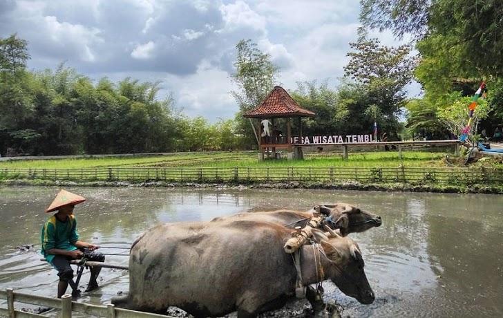 Tips Kelola Desa Wisata Ala Yogya Agar Bisa Awet