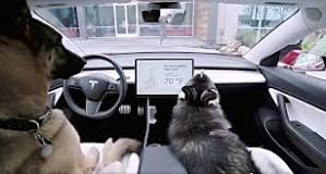 carro tesla para cães