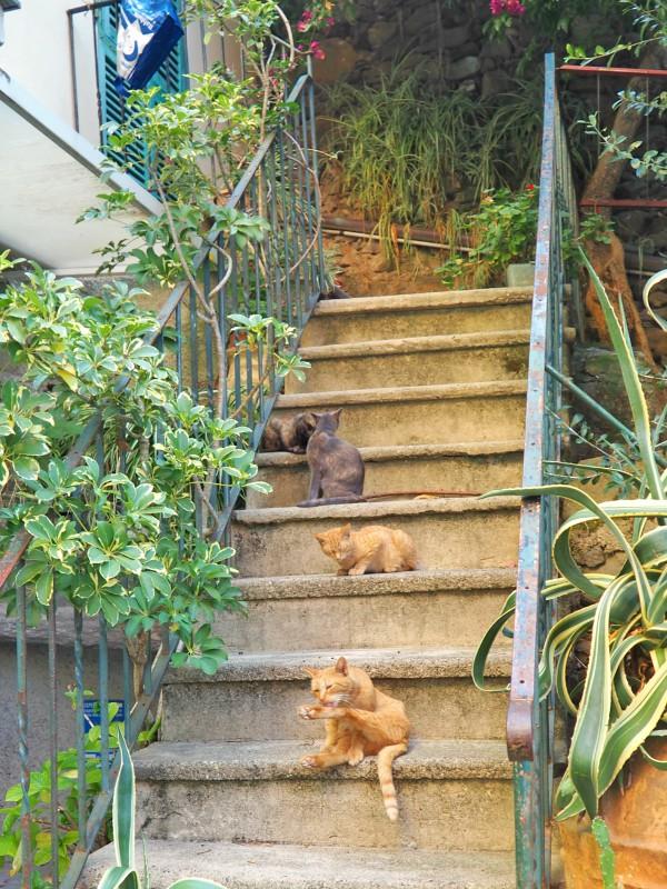 Manarola stairs