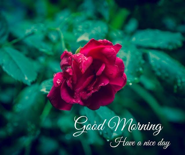 flower pics for good morning
