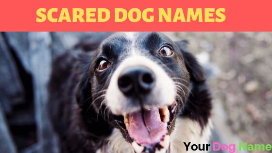 Scared Dog Names
