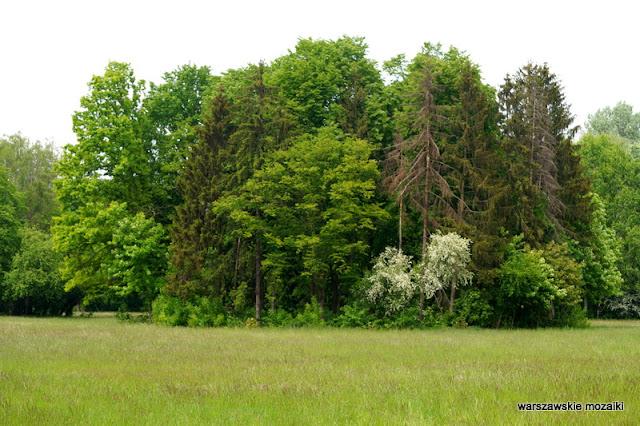 łąka Warszawa Warsaw Bielany Młociny teren zielony parki drzewa las