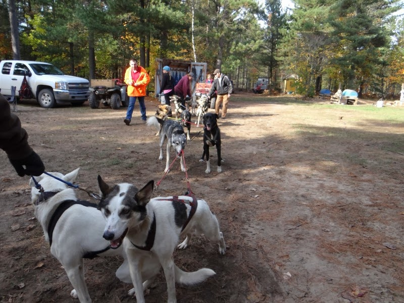 Nature S Kennel Sled Dog Racing And Adventures