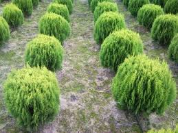 Bahçe Bitkileri Üretimi ve Pazarlaması nedir