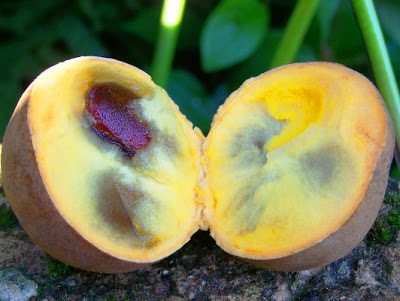 http://tipspetani.blogspot.com/2017/10/mengenal-pohon-kepel-atau-buharol.html