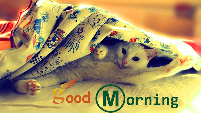 Good Morning Cat HD Wallpaper