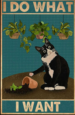 Cat knocking over a plant