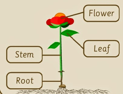 http://www.bbc.co.uk/schools/scienceclips/ages/5_6/growing_plants_fs.shtml