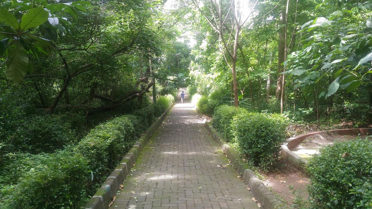 Jalan Setapak Hutan Kota Srengseng