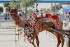 Camel Fair Of Pushkar India-2020 | Things To Do In Camel Fair Of Pushkar
