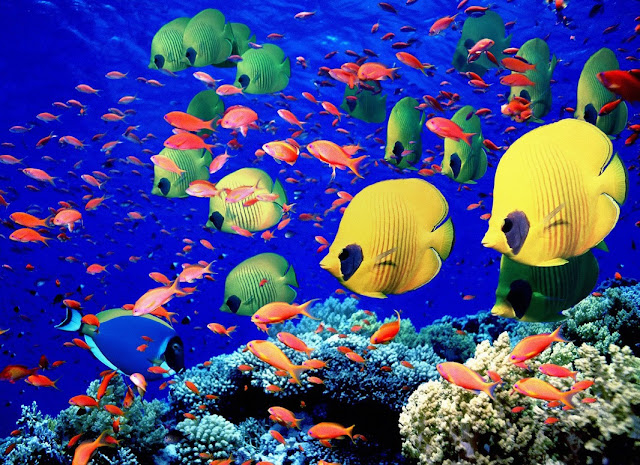 Underwater sea creatures and other animals Wallpapers | SEA LIFE Adventure Backgrounds