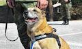 Οι Ένοπλες Δυνάμεις βράβευσαν σκυλίτσα που γέννησε 43 επίλεκτα κουτάβια (φωτο)