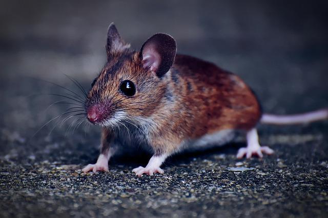 tikus merajalela