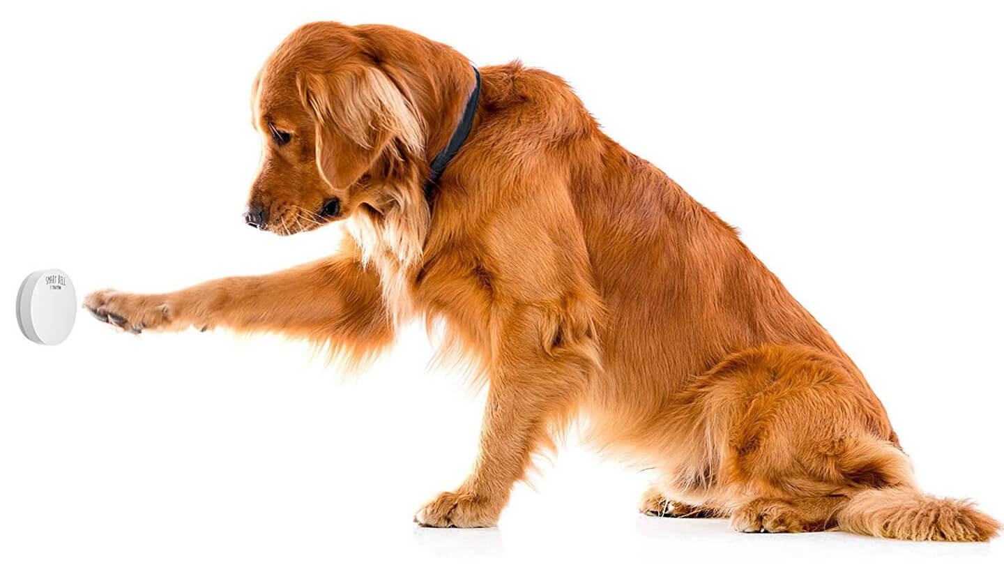 Potty Bell Training: How to Train Your Dog to Ring a Bell to Use the Potty