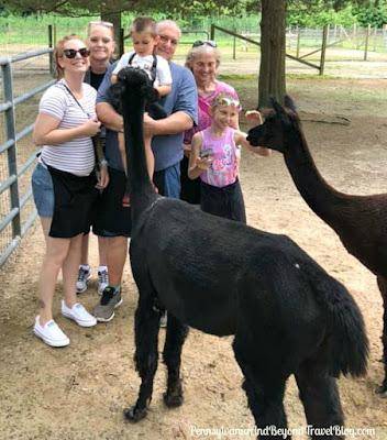 Jersey Shore Alpaca Farm in Cape May, New Jersey