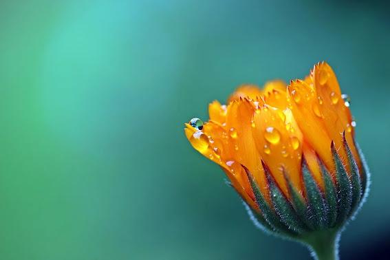 flower in Spanish