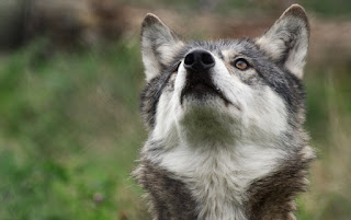 yeşillikler • köpekler • yapraklar • sevinç • Park • oyun • bahçe • köpek yavruları • çift • yürüyüş • beyaz• bir çift • Labrador • İkili • arkadaşlar • çalılar • iki • Av köpeği • iki köpek • av köpeği • iki yavru  alan • köpekler • beyaz • yaz • bak • çiçekler • ruh hali • glade • siyah • iki • Maki• köpek • çayır • köpek • çift • kırmızı • bir çift • Labrador • iki • namlu • köpek • köpek • Labradorlar • arka plan bulanık • iki köpek • haşhaş alan • yakışıklı • köpek • iki köpek  sonbahar • köpekler • bak • doğa • poz • konfor • ısı • arka plan • ruh hali • ateş • birlikte• iki • güzellik • pençeleri • battaniye • ateş • çift • ahşap • ekose • kutu • bir çift• İkili • yalan • iki köpek • kenar kömür ocağı • benekli • birlikte  orman • köpekler • bak • doğa • poz • Park • koyu arka plan • iki • köpek • bitkiler • bebek• çift • köpek yavrusu • beyaz • bir çift • Labrador • İkili • yalan • Av köpeği • iki köpek • yüzler• anne ve çocuk