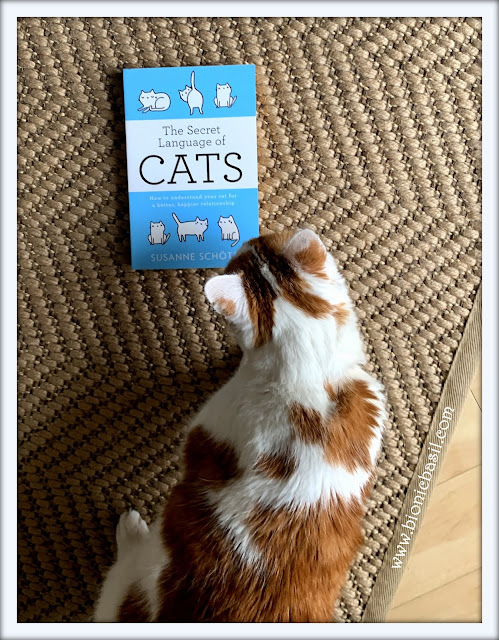 Feline Fiction on Fridays #122 ©BionicBasil® The Secret Language of Cats - Amber's Purrsonal Copy