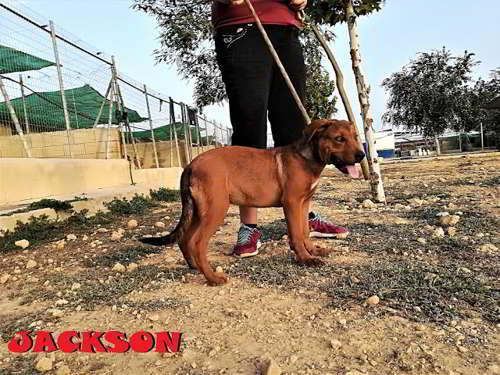 cachorros talla mediana grande 2