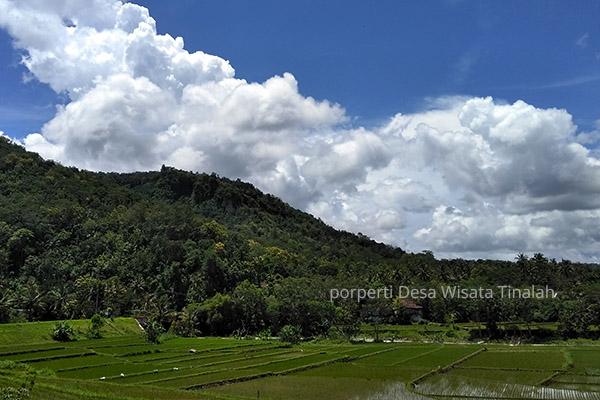 Pesona Desa Wisata Kulon Progo Tempat Wisata Jogja