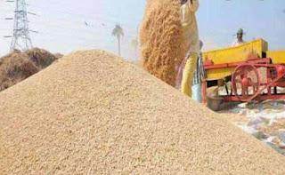 पिंडरई में 242 कुंटल अमानक धान जबत खाद्य विभाग की टीम ने की कार्यवाही