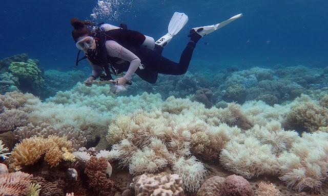 Большой Барьерный Риф умирает, и его уже не спасти