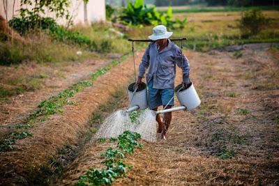 Berkebun, berkebun sayuran, gerakan berkebun, berkebun organik, berkebun sayuran organik,