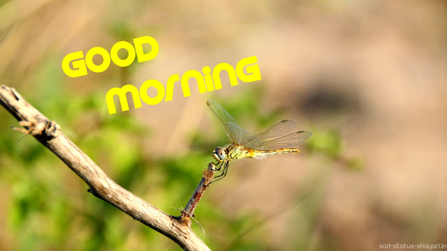 Good morning image dragon fly
