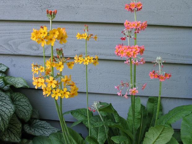 petal press garden plants