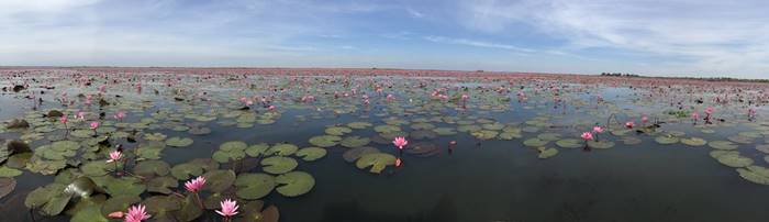 Beautiful Red Lotus Lake in Udon Thani, Thailand