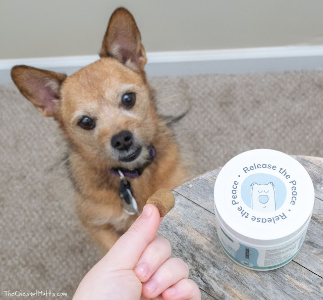 dog treats to help with anxiety