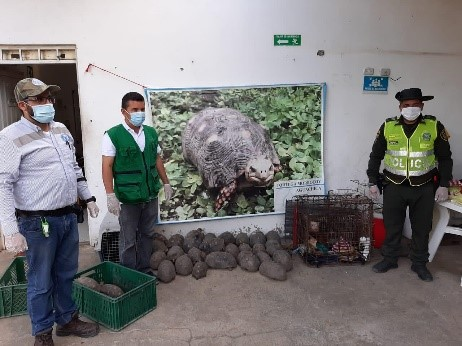 hoyennoticia.com, Corpocesar en Aguachica recuperó 31 Morrocoyes, dos micos y un canario