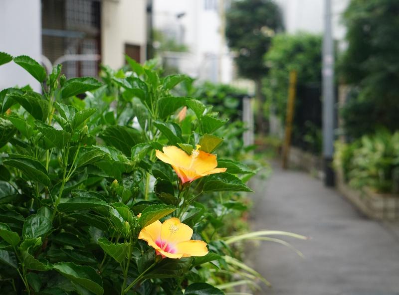 daikanyama, tokio_trendialueet