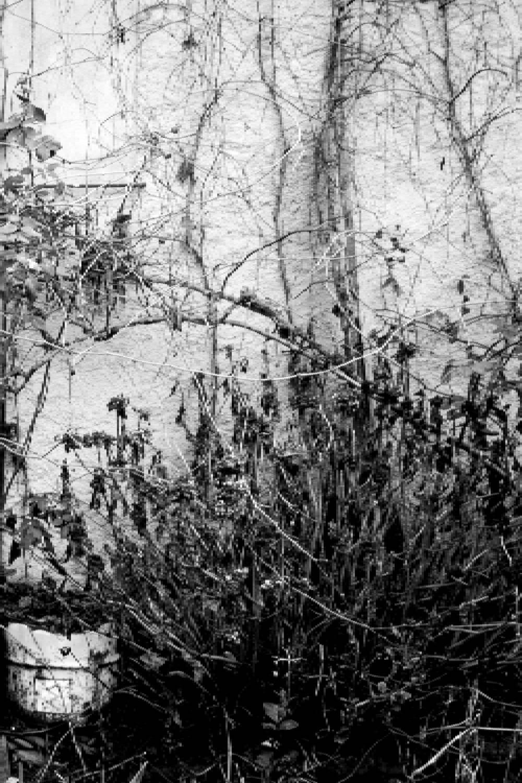 ambiente de leitura carlos romero cronica conto poesia narrativa pauta cultural literatura paraibana gonzaga rodrigues jornal o norte historia jornalismo paraibano diarios associados Aluisio Moura evandro da nobrega
